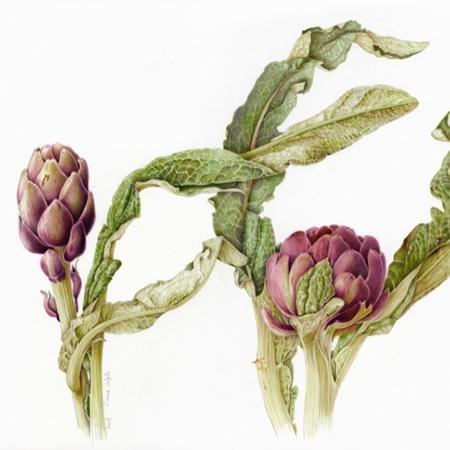Pittura Botanica - Intro