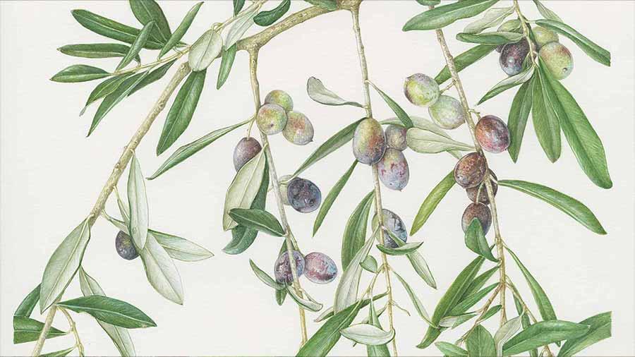 Pittura Botanica - Studio Arti Floreali