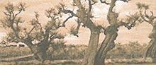 Mostra - Il giardino degli olivi - 2003