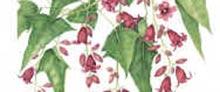 Mostra - Botanical Art - 2003