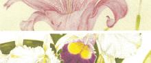 Mostra - Percorsi Botanici - 2005