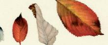Mostra - Un soffio di vento - Lucilla Carcano - 2009