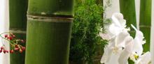 Mostra - Take: bambu e ikebana - 2010