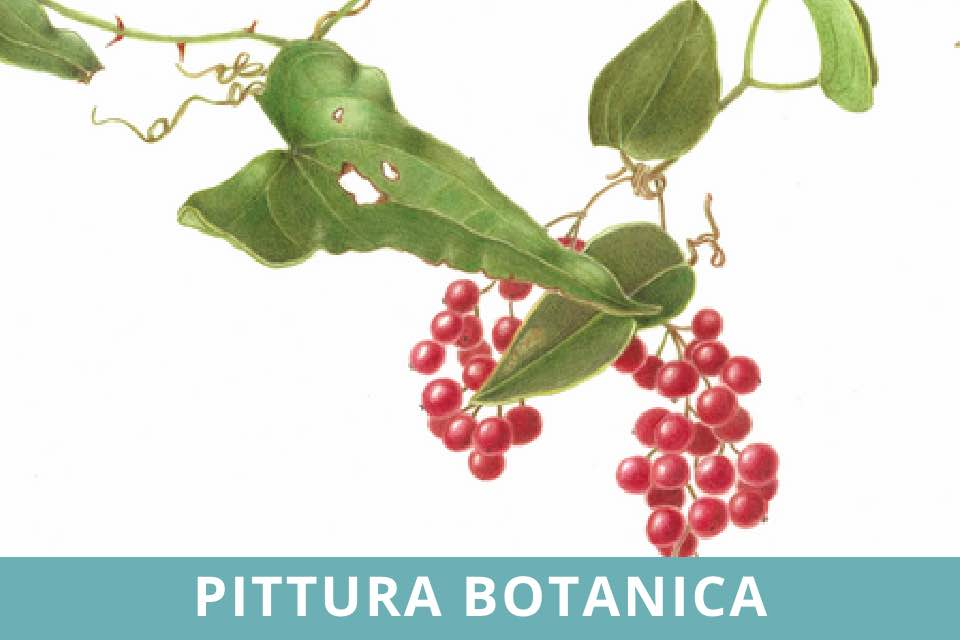 Pittura Botanica - Corso - Silvana Volpato - Ottobre 2021