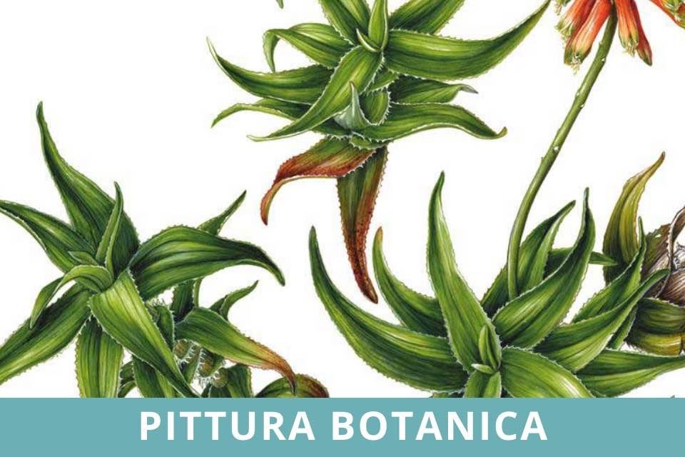 Pittura Botanica - Seminario - Maria Rita Stirpe - Novembre 2021