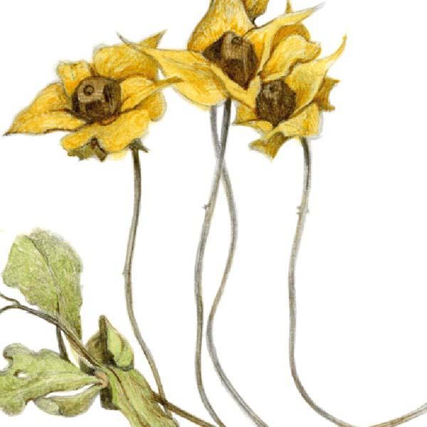Di Fiore in Fiore - Carcano