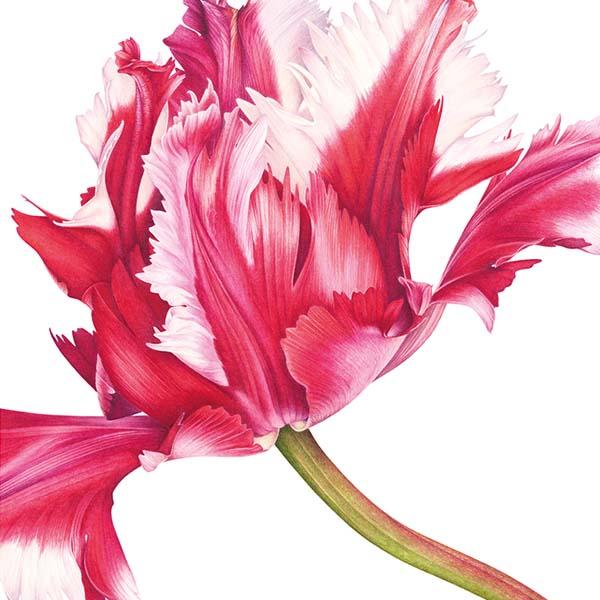 Di Fiore in Fiore - Lombardi