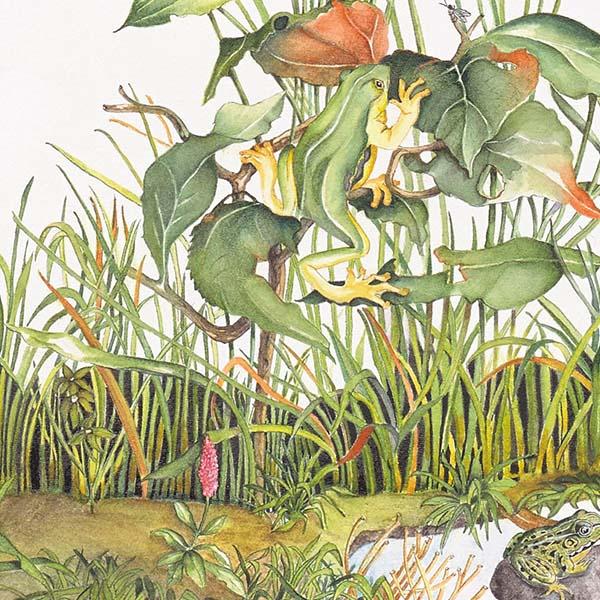 Di Fiore in Fiore - Pucci da Filicaja