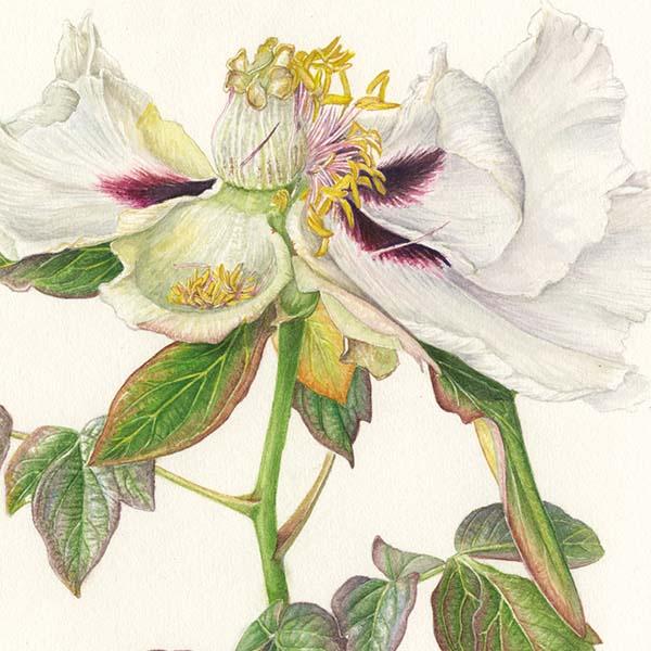 Di Fiore in Fiore - Stirpe