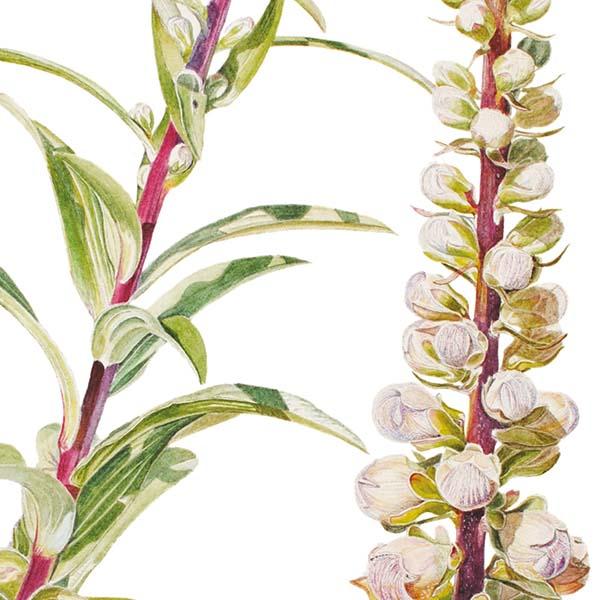 Di Fiore in Fiore - Ubertini