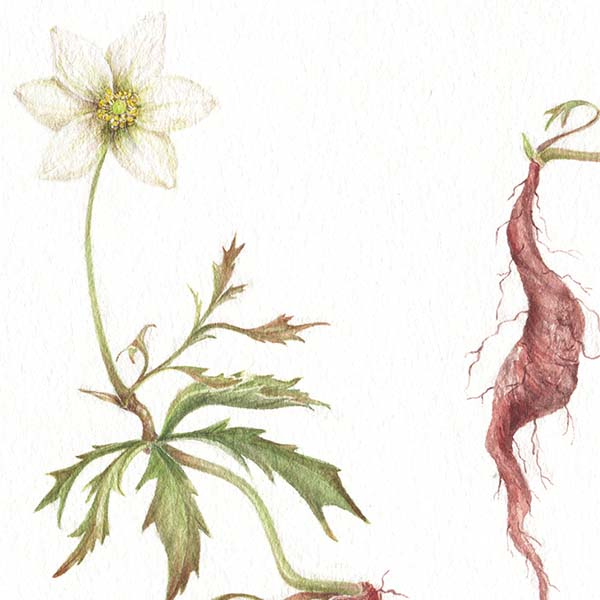 Di Fiore in Fiore - Vanoli
